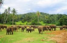 Экскурсионный тур на Шри-Ланку * Мини тур - 01 ночь 2 дня *